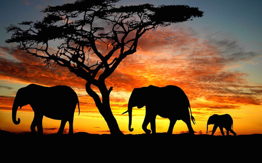 World Nature Elephants