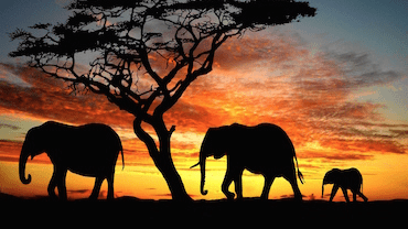 elephants_web